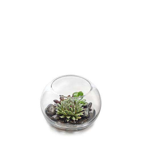 Succulent Terrarium Flower Deliveries Online