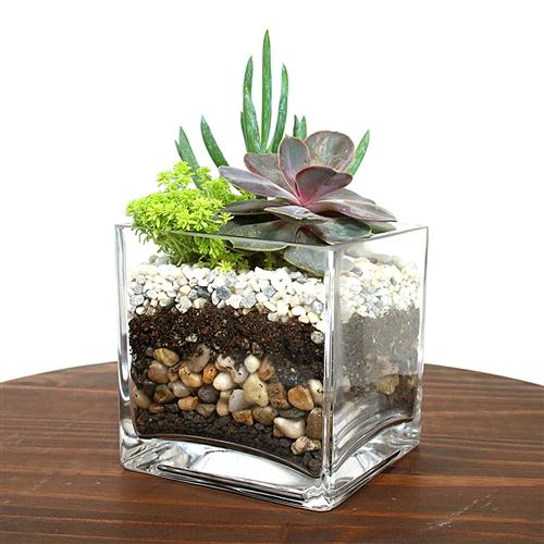 Large Terrarium Flower Deliveries Online